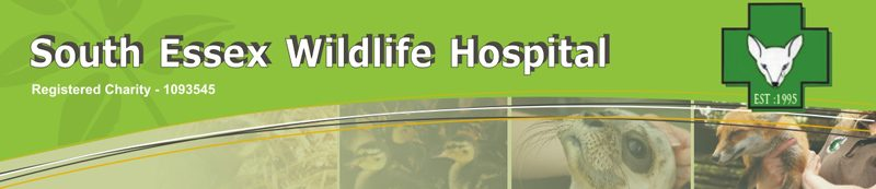 South Essex Wildlife Hospital